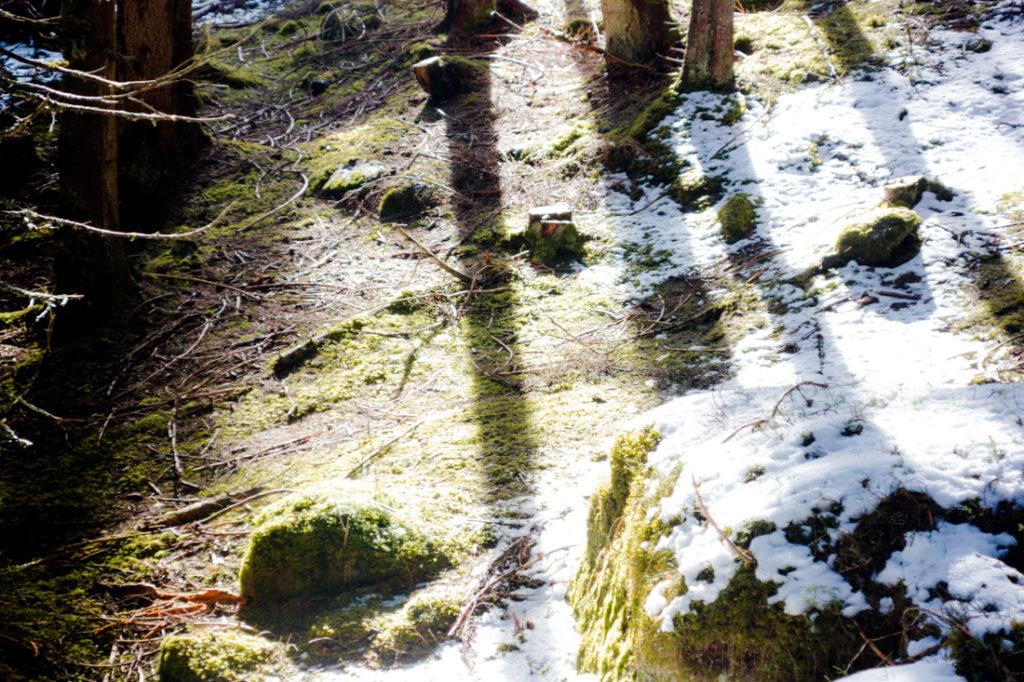 Fichtenwald im Gschnitztal - Wipptal - Foto von Carmesine
