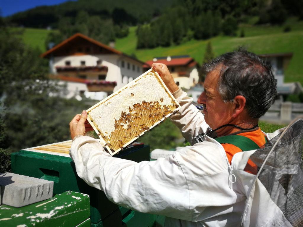 Honigernte im Wipptal