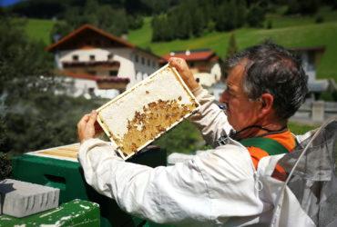 Honigernte in Navis