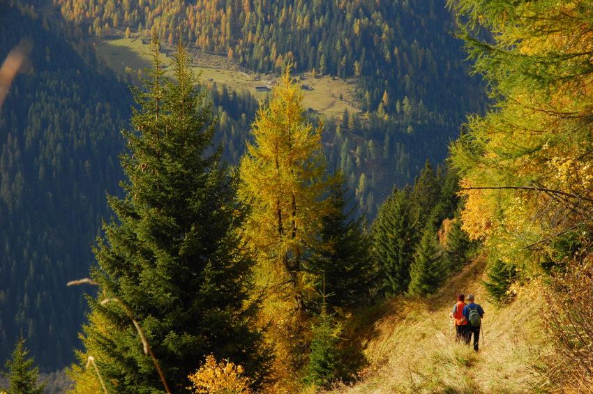 Der Wald in den prächtigsten Farben, Wipptal