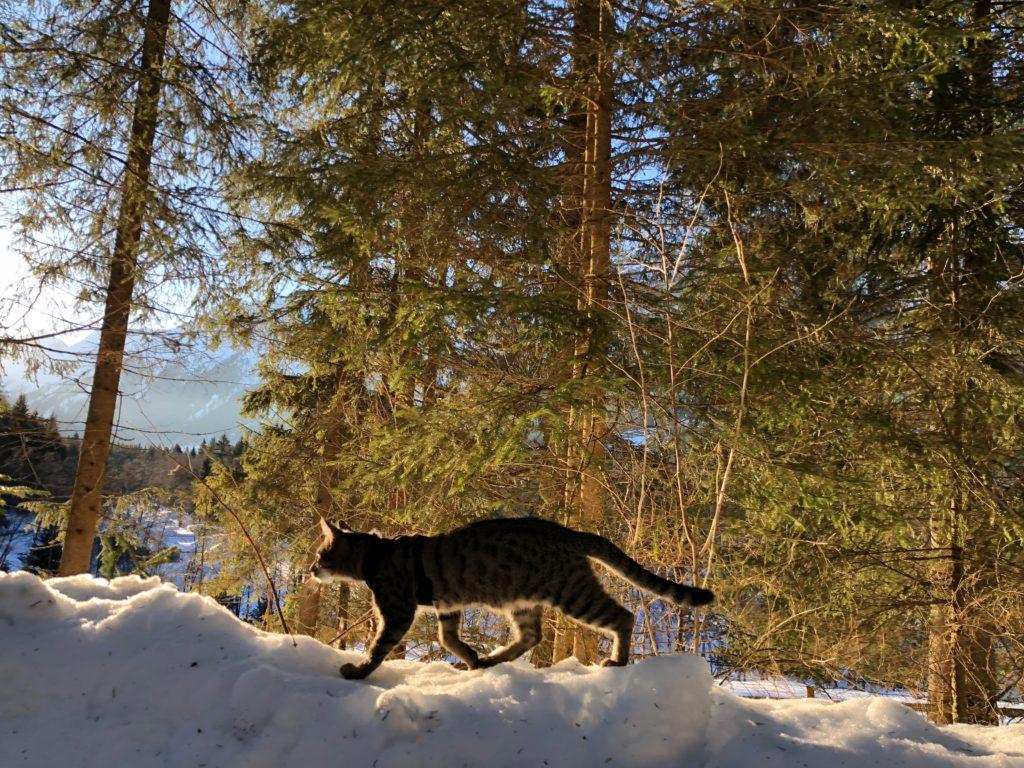Winterwandern im Gschnitztal