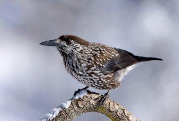 Wildtiere im Winter  – Schläfer und Nichtschläfer