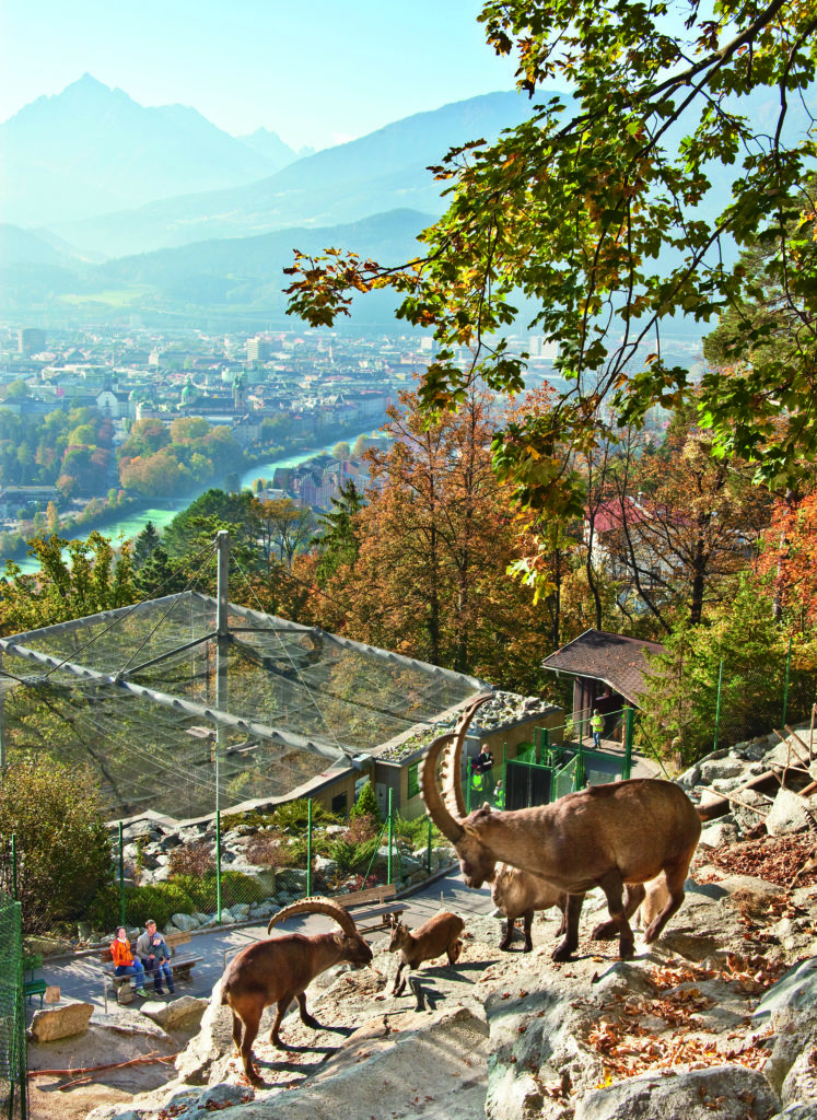 Alpenzoo_©TVB_Innsbruck _Christof_Lackner2
