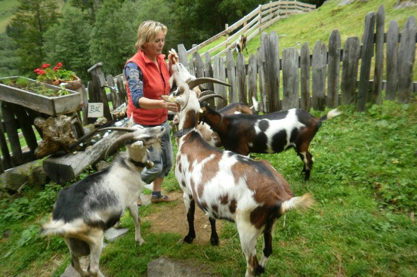 Helga Hager mit ihren Ziegen
