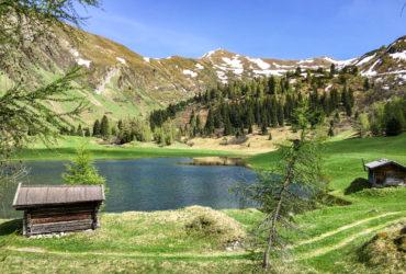 Ein einmaliges Erlebnis: Almen und Bergwiesen erforschen und pflegen