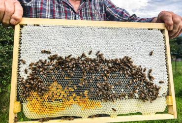 Das Liebesleben der Naviser Bienen