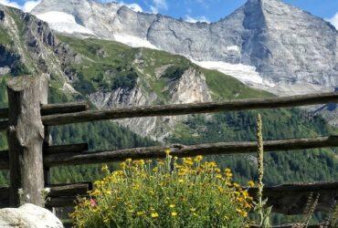 Altes Wissen – neuer Kurs: Alpenblumen & Bergkräuter