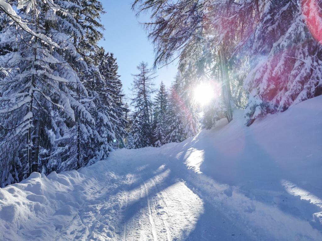 Tief verschneiter Wald