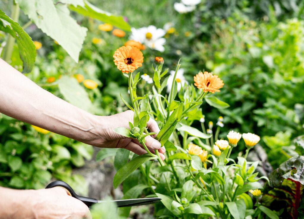 Blumen aus dem Bauerngarten